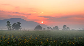 Sunrise over the mountain and sunflower field Royalty Free Stock Photos