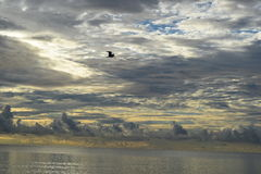 Sunrise over the ocean in Florida Royalty Free Stock Photography