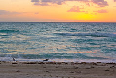 Sunrise over the ocean in Miami Beach. Seagulls wait for the sun to appear above the clouds Royalty Free Stock Photos
