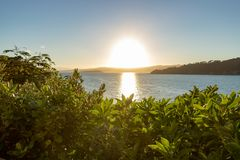 Sunrise Over Ocean In New Zealand. Sun just over the horizon shines brilliantly over ocean and native trees Stock Photography