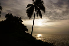 Sunrise over the ocean with waves crashing along rocky shore. On a voggy Big Island Hawaii day with coconut trees palm silhouette hanging over the water Royalty Free Stock Photography