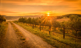 Sunrise over olive field Royalty Free Stock Images