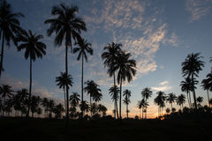 Sunrise over palm trees in Phuket Stock Photos