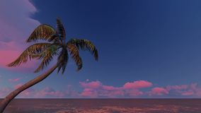 Sunrise over and palm trees tropical sea. Sunrise over and palm trees tropical ocean stock video