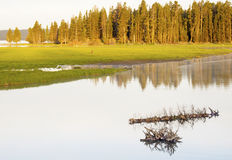 Sunrise over a peaceful lake in Yellowstone National Park. Royalty Free Stock Image