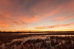 Sunrise Over the Refuge Royalty Free Stock Photo