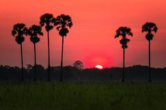 Sunrise over the rice field stock images
