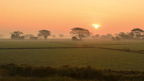 Sunrise over the rice field. Myanmar Stock Image