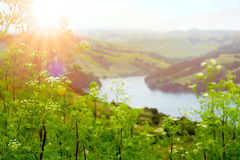 Sunrise over river valley. Sun is rising over a river with wild flowers in foreground and rolling hills in distance royalty free stock photos