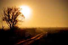 Sunrise over road in country. Golden sunrise over countryside with silhouetted tree and road receding into distance Royalty Free Stock Photo