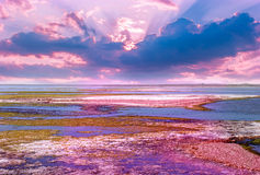 Sunrise over the salt lakes. Royalty Free Stock Images