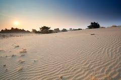 Sunrise over sand dunes Stock Images