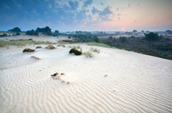 Sunrise over sand dunes and heather Stock Images