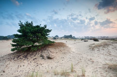 Sunrise over sand dunes Stock Image