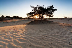 Sunrise over sand dunes with wave texture Stock Image