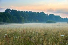 Sunrise over a scenic meadow with natural flowers. Vivid colors with dramatic clouds and fog. Wilhelminenaue, Bayreuth Royalty Free Stock Images