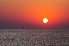 Sunrise over a sea with birds over the water.  Royalty Free Stock Image