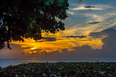 Sunrise over the Sea Grapes. Sunrise over the Atlantic Ocean with sea grape trees and bushes in the foreground Stock Image
