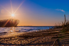 Sunrise over the sea. Sunrise with warm yellow sea grass at the coastline Royalty Free Stock Photography