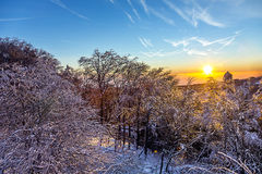 Sunrise over snow-covered forest Stock Photography
