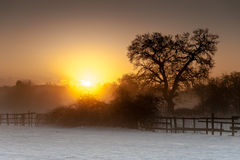 Sunrise over a snowy field Royalty Free Stock Photos