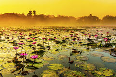 Sunrise over a spring lake with lilies royalty free stock photo