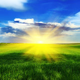 Sunrise over a spring meadow Royalty Free Stock Images