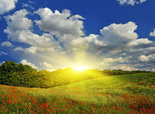 Sunrise over the spring meadow royalty free stock photo