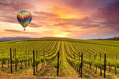 Free Sunrise Over Spring Wine Vineyards And Hot Air Balloon Stock Image - 206611721