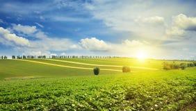 Sunrise over sunflower field Stock Image