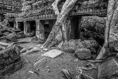 Sunrise over Ta Phrom Royalty Free Stock Photos