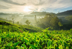 Sunrise over tea plantations in Munnar Royalty Free Stock Photography
