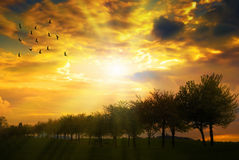 Sunrise Over Tree Line Royalty Free Stock Photos