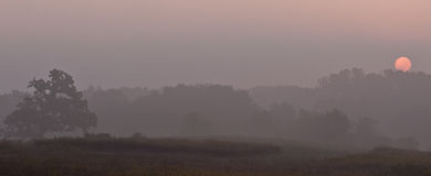 Sunrise over a tree line in the morning mist Stock Image