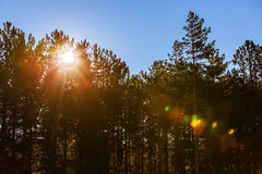 Sunrise over the trees Royalty Free Stock Photos