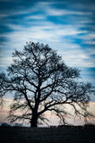Sunrise over trees Royalty Free Stock Photography