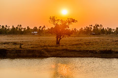 Sunrise over the trees and swamps. Sunrise over the trees and swamps Royalty Free Stock Photos