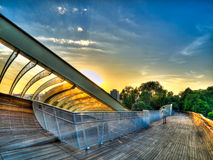 Sunrise over Treetop Boardwalk stock images