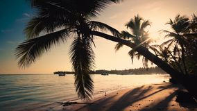 Sunrise over tropical island beach and palm tree. Punta Cana Dominican Republic.  stock video