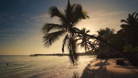 Sunrise over tropical island beach and palm tree. Punta Cana Dominican Republic.  stock footage
