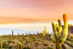Sunrise over Uyuni salt lake from island Incahuasi in Bolivia Stock Photography