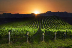 Sunrise over vineyard Royalty Free Stock Photography