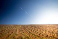 Sunrise over a vineyard Stock Photo