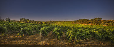 Sunrise over the vineyards Royalty Free Stock Photography
