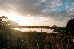 Sunrise over water and reeds Royalty Free Stock Photo