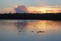 Sunrise over West Lake in Everglades National Park. Sunrise over West Lake in Everglades national Park, Florida royalty free stock photos