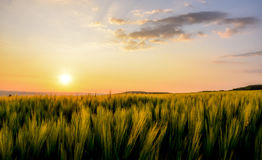 Sunrise over wheat. Photo is taken in the summer early morning Stock Photos