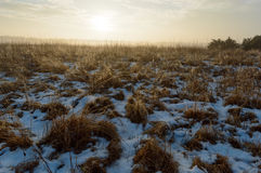 Sunrise over wild grass with water drops from melting snow. And low fog in the distance Royalty Free Stock Photo