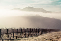 Sunrise over Yarra Valley In Winter. Sunrise with fog on a cold winter's morning in the Yarra Valley, Victoria, Australia royalty free stock photography