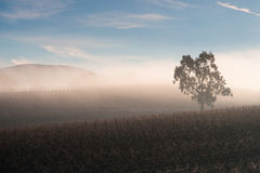 Sunrise over Yarra Valley In Winter Stock Photo